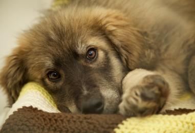 29 animals saved from likelihood of cruelty