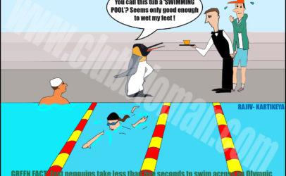 Penguin Swim Training for Olympics
